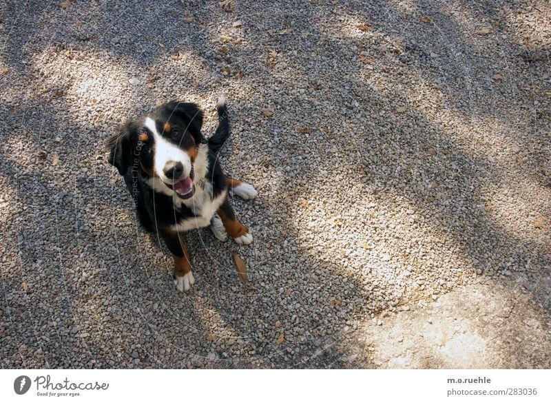 L O S ! Hund Natur schön Freude Tier Umwelt Glück Park Freizeit & Hobby warten authentisch frei Fröhlichkeit Lifestyle Freundlichkeit Lebensfreude