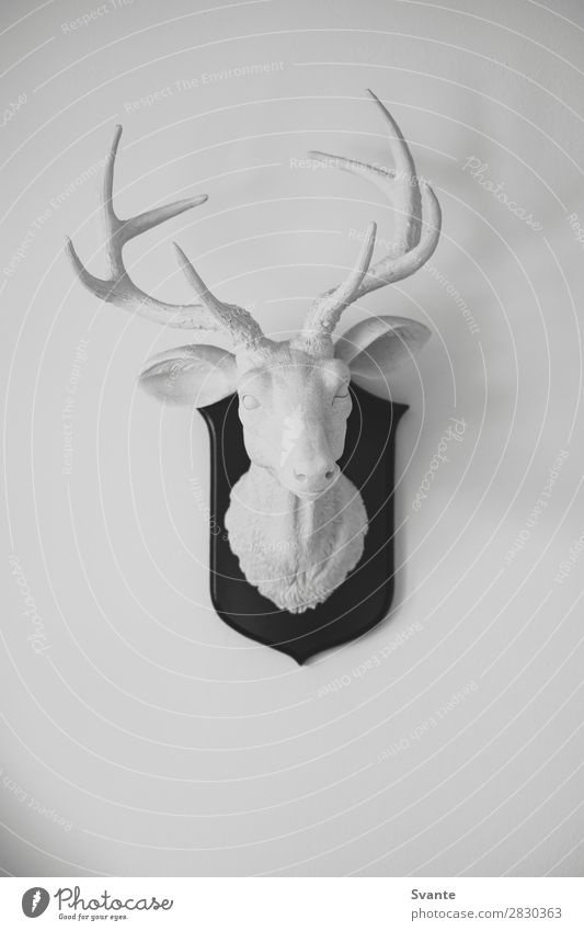 Weiße Hirschkopfskulptur an weißer Wand elegant Design Innenarchitektur Dekoration & Verzierung Kunst Skulptur München Deutschland Mauer Tiergesicht 1