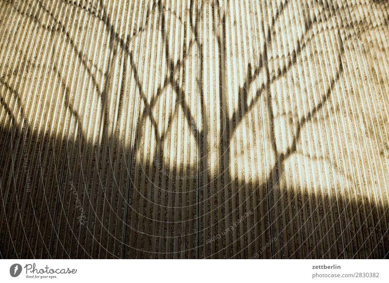 Schatten again Ast Baum Fassade Frühling Fuge Herbst Licht Mauer Menschenleer parallel Perspektive Baumstamm Textfreiraum Wand Beton Zweig Muster schraffur