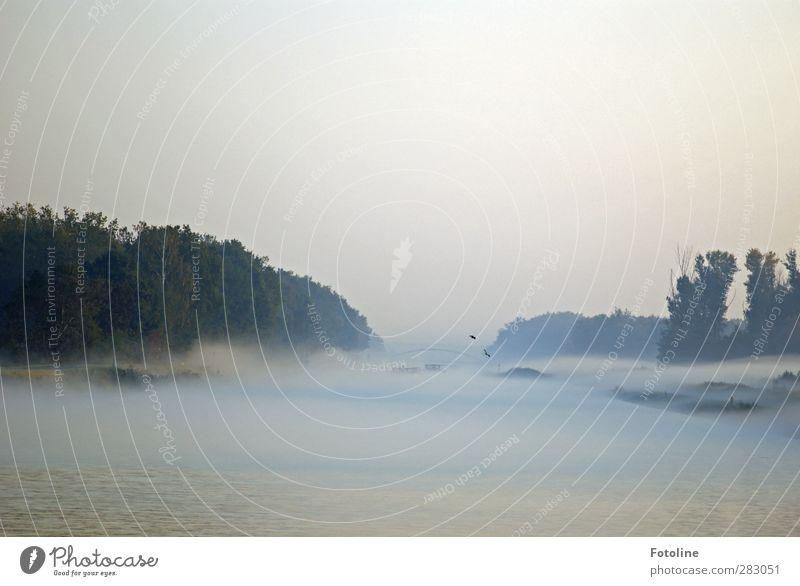 Nebel am Morgen, vertreibt Kummer und Sorgen Umwelt Natur Landschaft Tier Urelemente Wasser Himmel Wolkenloser Himmel Herbst Pflanze Baum Küste Flussufer hell