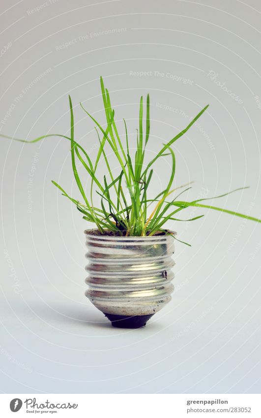 Grüne Energie Natur Pflanze Blatt Umwelt Gras Kunst Lampe Metall Energiewirtschaft Technik & Technologie Klima Elektrizität Industrie Windkraftanlage nachhaltig