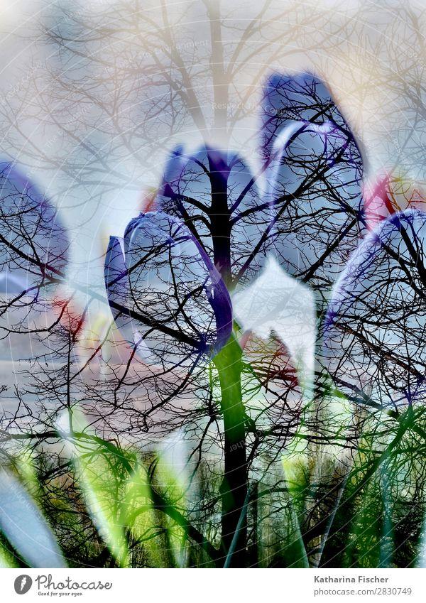 Tulpen Baum Doppelbelichtung Natur Pflanze grün weiß rot Blume Blatt Winter Herbst gelb Blüte Frühling Kunst orange rosa