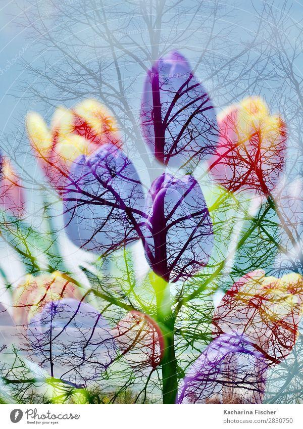 Tulpen Blumenstrauß Baum Doppelbelichtung Natur Pflanze blau grün weiß rot Winter Herbst gelb Frühling Kunst orange rosa Dekoration & Verzierung
