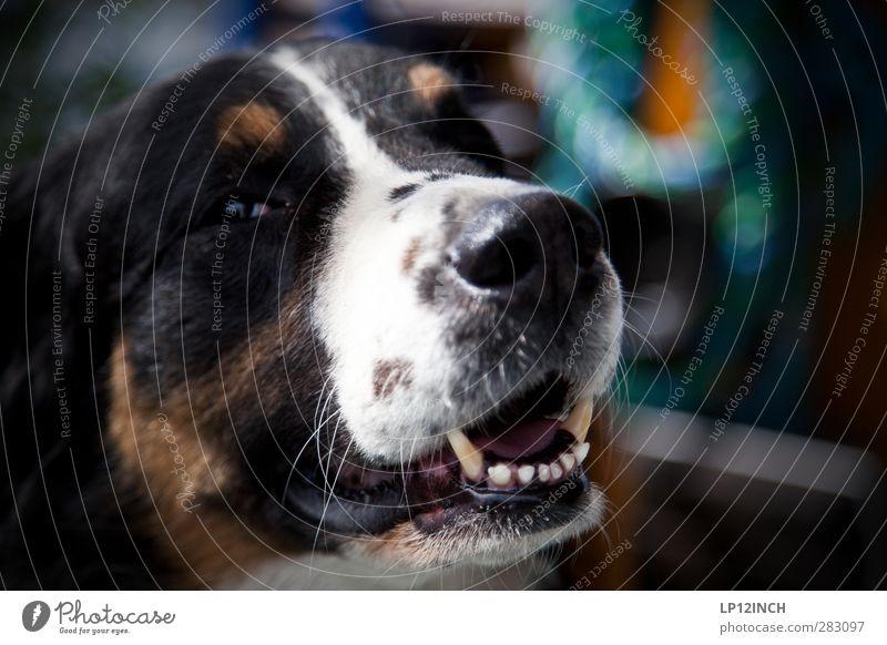 Treue. Hund schön Tier Freude Glück Freizeit & Hobby Angst Kraft Freundlichkeit Sicherheit Wachsamkeit Partnerschaft Geborgenheit Verantwortung rebellisch