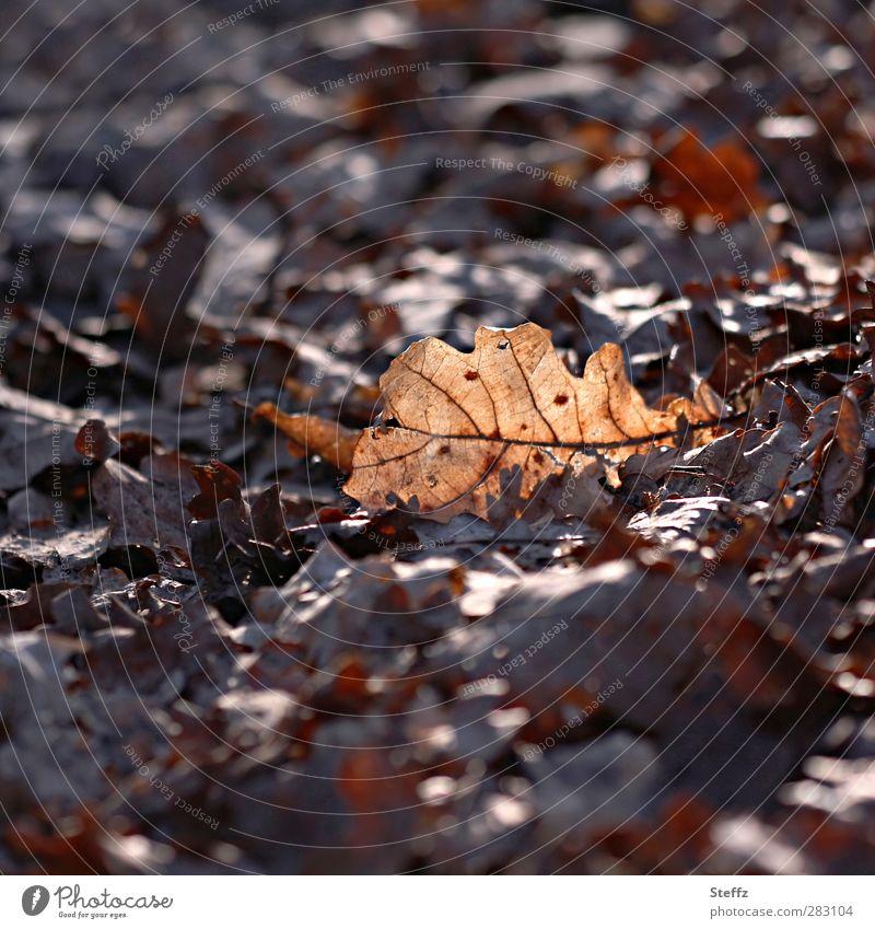 Ein lichter Moment Natur Sonnenlicht Herbst Pflanze Blatt Eichenblatt Herbstlaub Wald Waldboden leuchten braun achtsam Lichtstimmung einzigartig Nostalgie