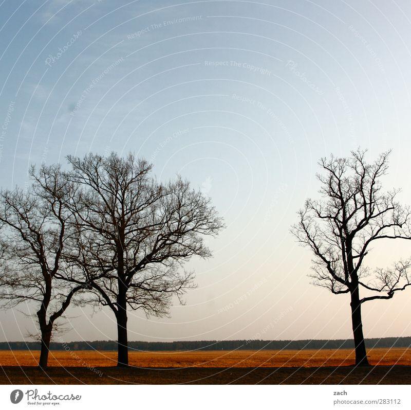 Brandenburg Umwelt Natur Landschaft Pflanze Himmel Wolkenloser Himmel Herbst Winter Schönes Wetter Baum Wiese Feld Straße Wege & Pfade blau Vergänglichkeit