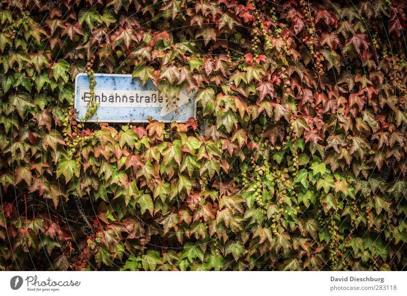 Herbst vs. STVO Natur Pflanze Tier Schönes Wetter Efeu Blatt Verkehr Straßenverkehr Verkehrszeichen Verkehrsschild blau braun mehrfarbig gelb grün orange rot