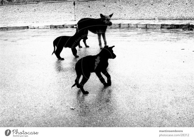 hunde im regen Strand Regen Asphalt