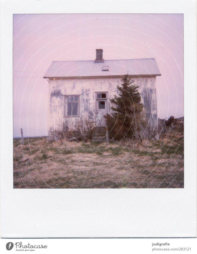 Island Natur alt Pflanze Baum Einsamkeit Landschaft Haus Fenster klein Stimmung Tür Fassade Treppe Häusliches Leben kaputt Vergänglichkeit