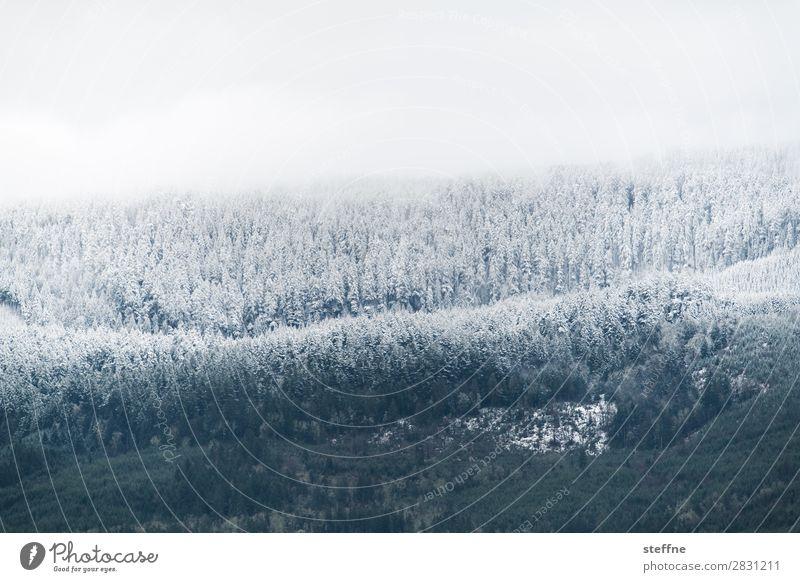 Abkühlung Winter Eis Frost Schnee Baum Wald Berge u. Gebirge kalt erfrieren Raureif Schneefallgrenze USA Oregon Farbfoto Außenaufnahme Menschenleer