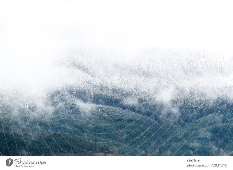 letitsnow Winter Eis Frost Schnee Schneefall Wald Berge u. Gebirge kalt Raureif Schneefallgrenze USA Oregon Farbfoto Außenaufnahme Menschenleer