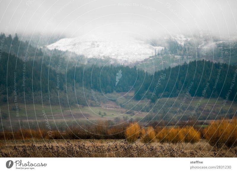 . Natur Landschaft Herbst Winter Nebel Schnee Wald Berge u. Gebirge kalt USA Oregon Farbfoto Außenaufnahme Menschenleer Textfreiraum oben Textfreiraum Mitte