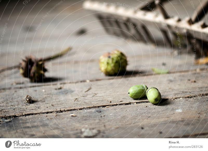 HerbstStill VI Arbeit & Erwerbstätigkeit Reinigen alt authentisch Ordnung Vergänglichkeit Kehren harken Rechen Kastanie Eicheln Holzfußboden Flur kaputt