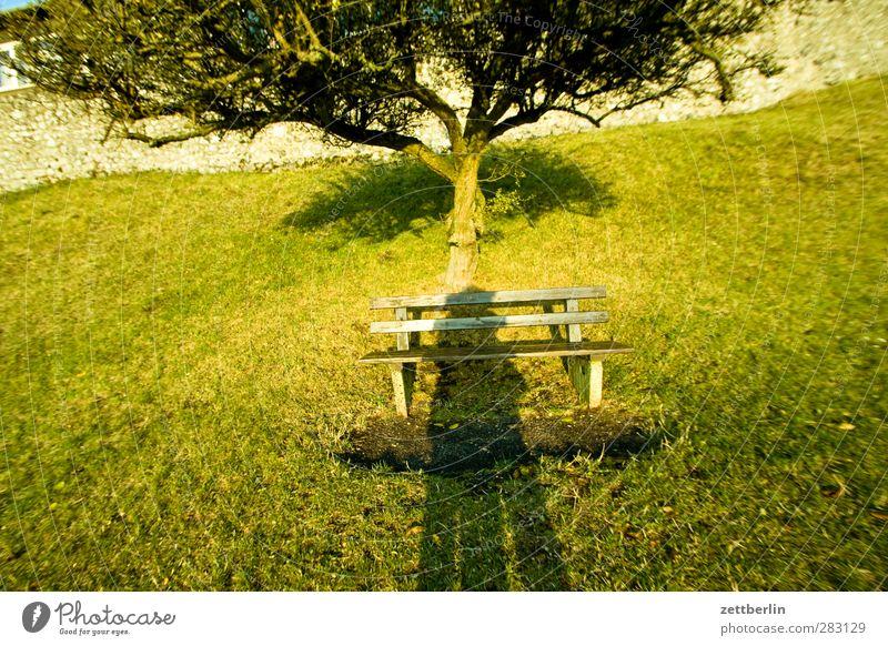 Diverse Schatten Sonne Natur Landschaft Sonnenaufgang Sonnenuntergang Wetter Pflanze Baum Garten Park Wiese Fröhlichkeit Zufriedenheit Lebensfreude