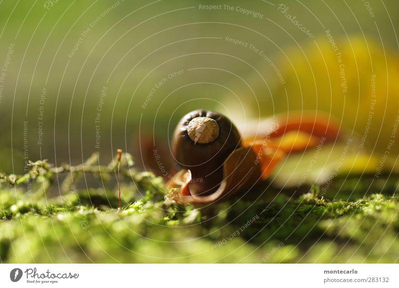 herbstfrucht Umwelt Natur Pflanze Sonne Sonnenlicht Herbst Moos Grünpflanze Wildpflanze Eicheln authentisch einfach frisch klein natürlich rund trocken Wärme