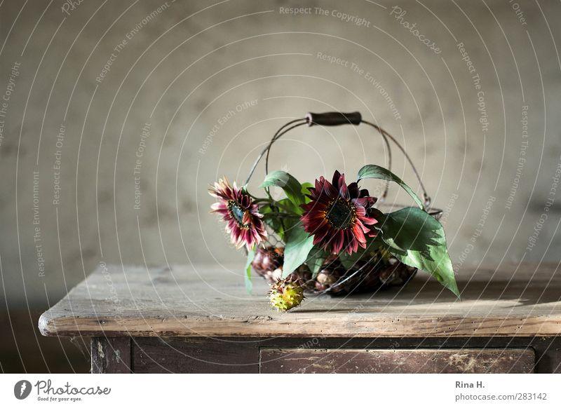 HerbstStill VII Blume natürlich Frucht verfallen Blühend Stillleben Sonnenblume Korb antik herbstlich Landleben Kastanie Holztisch
