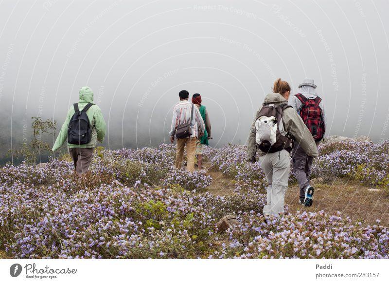 Nilgiri Sport wandern Mensch 5 18-30 Jahre Jugendliche Erwachsene 30-45 Jahre Umwelt Natur Landschaft Pflanze Herbst Klima schlechtes Wetter Wind Nebel Blume