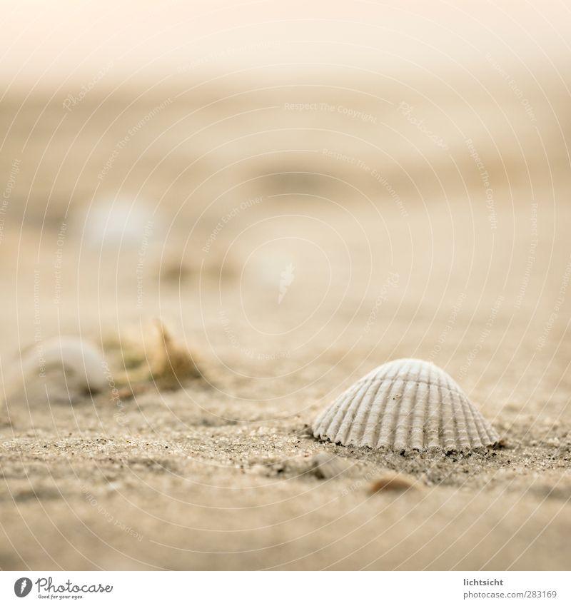 SandMeer II Natur Landschaft Urelemente Schönes Wetter Küste Strand Nordsee Ostsee Insel Warmherzigkeit Ferne Muschel Muschelschale Strandgut Herzmuschel