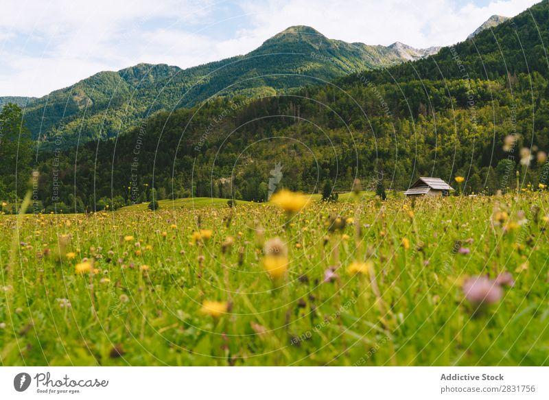 Kleine Blumen auf der Wiese Hügel klein grün Gras gelb Natur Landschaft Sommer Feld schön Landen Sonnenstrahlen ländlich Umwelt Sonnenlicht Pflanze hell Blüte