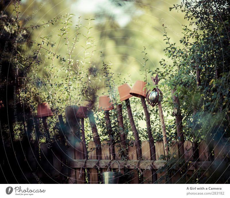 am Zaun entlang 2 Umwelt Natur Pflanze Garten wild Blumentopf Hecke Barriere Schutz Gedeckte Farben Außenaufnahme Menschenleer Textfreiraum oben Tag Licht