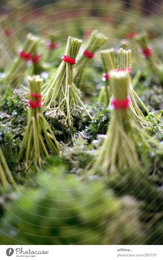 peters lilientanz grün rot Gesundheit rosa Gesunde Ernährung frisch Kräuter & Gewürze verkaufen Vegetarische Ernährung Bündel Nutzpflanze Küchenkräuter Petersilie zusammengebunden