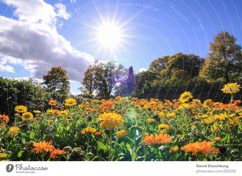 Ein schöner Tag Natur Pflanze Tier Himmel Wolken Frühling Sommer Schönes Wetter Baum Blume Blatt Blüte Garten Park Wiese blau mehrfarbig gelb grün orange weiß