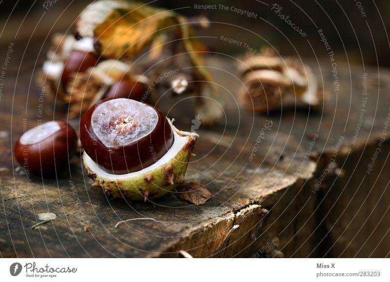Herbst Natur Wald braun Kastanienbaum Kastanienblatt Holz Baumstamm Jahresringe Baumfrucht Hülle offen Farbfoto Außenaufnahme Nahaufnahme Menschenleer