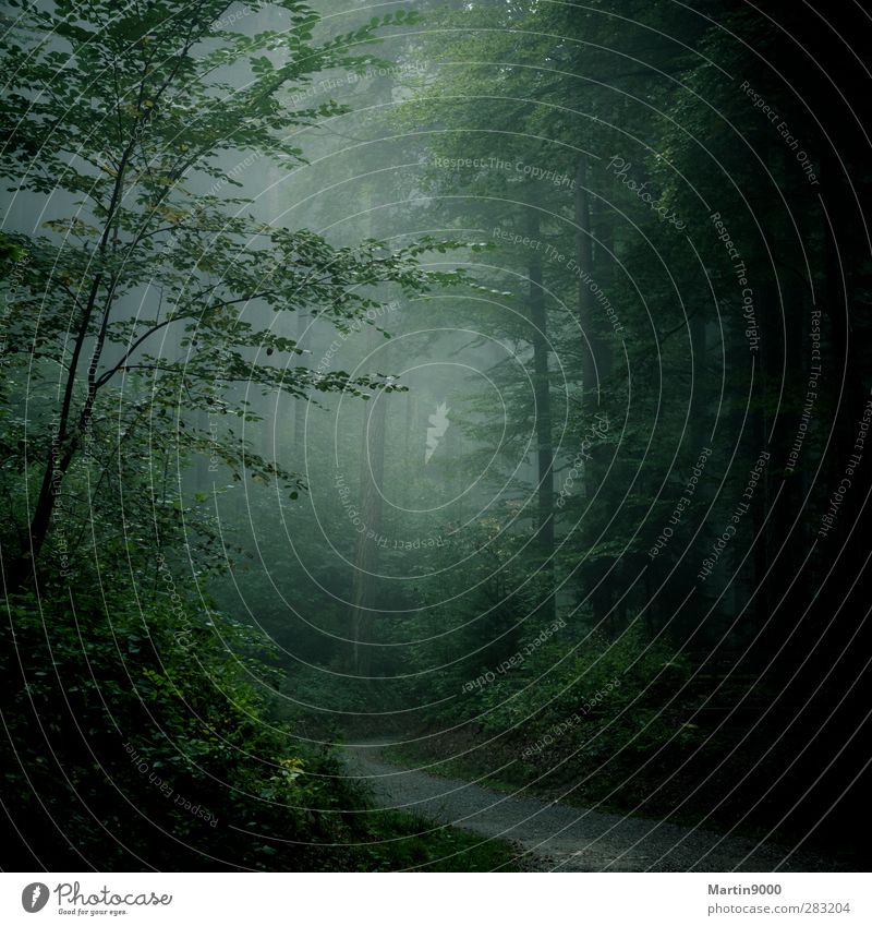 Nebelwald Natur Ferien & Urlaub & Reisen grün Baum Einsamkeit ruhig Wald Erholung dunkel Herbst grau Stimmung wandern Sträucher Romantik