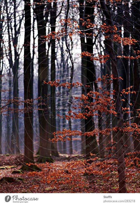 November im Wald verwunschen verwunschener Wald heimisch nordisch Herbstwald Waldbaden Stille Herbstlaub Laubwald braunrot Waldstimmung Novemberstimmung