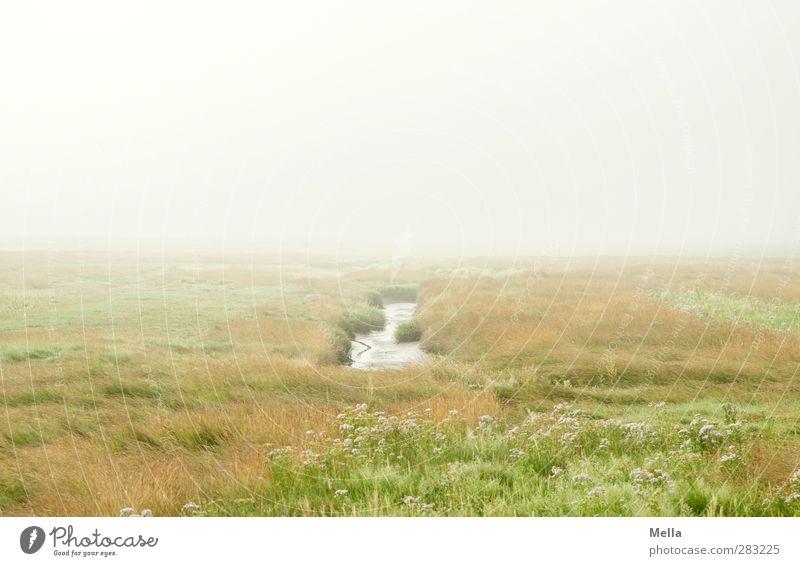 The way I am Natur Wasser grün ruhig Landschaft Umwelt Wiese Küste grau hell Horizont Stimmung Nebel Idylle trist Nordsee