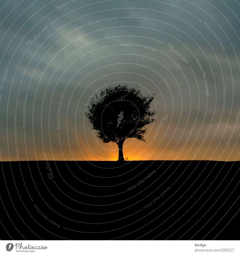 Abenddämmerung Landschaft Urelemente Gewitterwolken Sonnenaufgang Sonnenuntergang Baum leuchten ästhetisch außergewöhnlich bedrohlich fantastisch Wärme wild