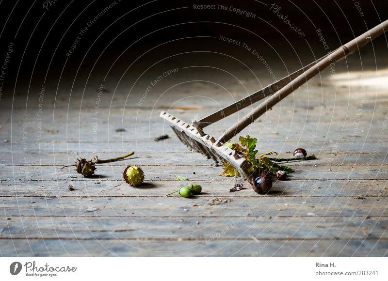 HerbstStill VIII Rechen Arbeit & Erwerbstätigkeit alt authentisch rein Kastanie Eicheln Reinigen harken Holzfußboden herbstlich Kehren Gedeckte Farben
