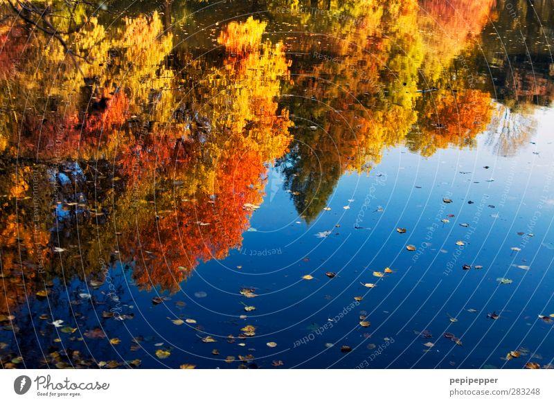 Indian Summer Natur Landschaft Pflanze Tier Wasser Himmel Baum Park Wald Seeufer blau gelb gold rot Idylle Herbstlaub herbstlich mehrfarbig Außenaufnahme Tag