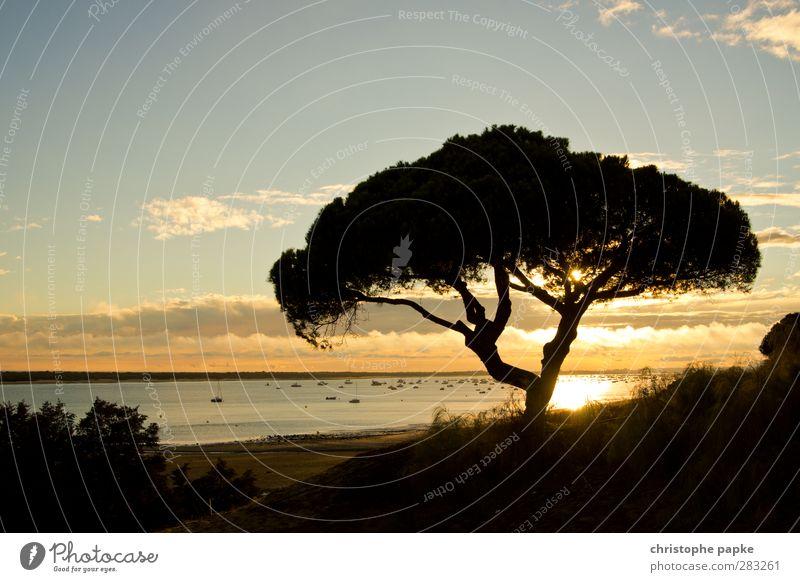 nirgendwo in afrika Ferien & Urlaub & Reisen Sommer Sommerurlaub Sonne Strand Himmel Sonnenaufgang Sonnenuntergang Pflanze Baum Küste Hafen Umwelt Kitsch Pinie