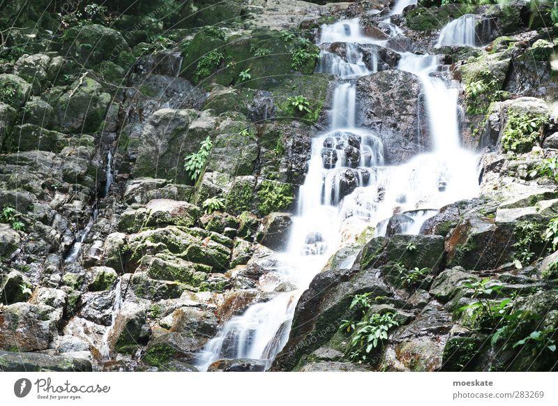 Tioman Wasserfall Natur Sommer Pflanze ruhig Erholung Ferne Leben Felsen Zufriedenheit Tourismus Ausflug Abenteuer Gelassenheit Urwald Wohlgefühl