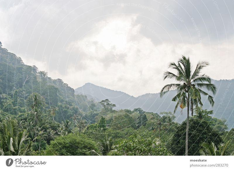 Primärwald Himmel Natur Ferien & Urlaub & Reisen Sommer Pflanze Baum Sonne Wolken Landschaft Ferne Umwelt Berge u. Gebirge Wärme Luft Insel Tourismus