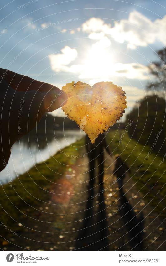 Herbstliebe Mensch Kind Jugendliche Blatt Erwachsene gelb Liebe Herbst Gefühle Familie & Verwandtschaft 18-30 Jahre Kindheit Herz Warmherzigkeit Spaziergang Vertrauen