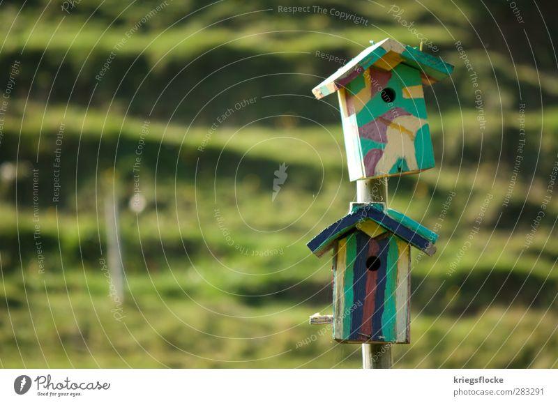 Wohnheimplatz Natur Haus Wiese Vogel Hügel Heimat Maler Tierliebe