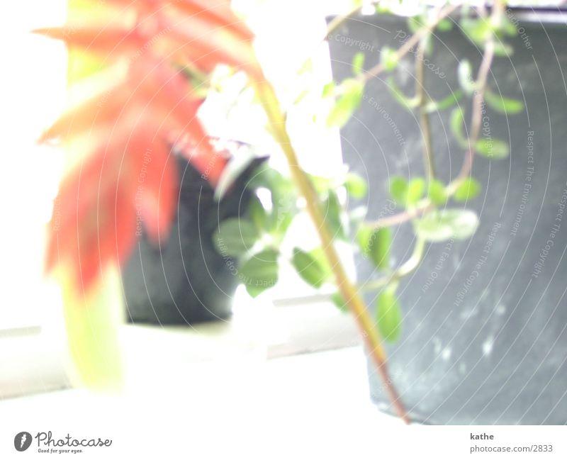 fensterbrett01 Blume grün Pflanze Fensterbrett Blattgrün