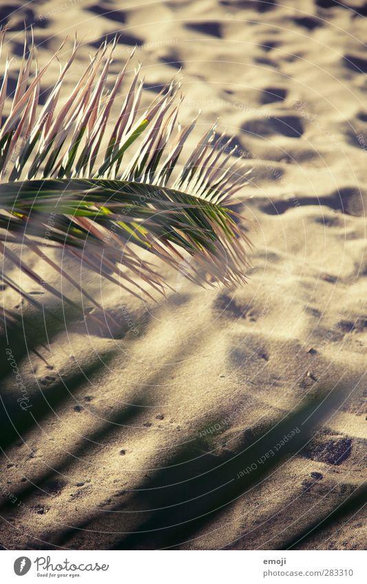 Sand zwischen den Zehen Umwelt Natur Sommer Klima Schönes Wetter Wärme Dürre Pflanze natürlich trocken Sandstrand Strand Palmenwedel Palmenstrand
