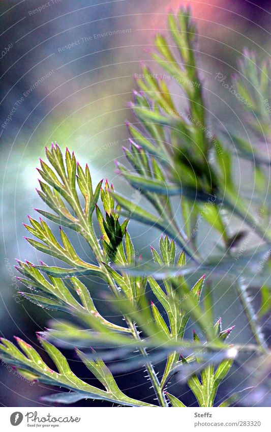 Karottenromantik Lebensmittel Gemüse Vegetarische Ernährung Vegane Ernährung Natur Pflanze Herbst Blatt Nutzpflanze Möhre Blattadern Blattfaser Blattschatten