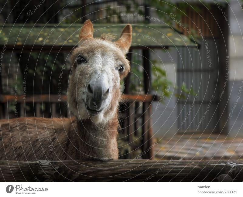 comedian grün Tier lachen braun Freundlichkeit Haustier frech