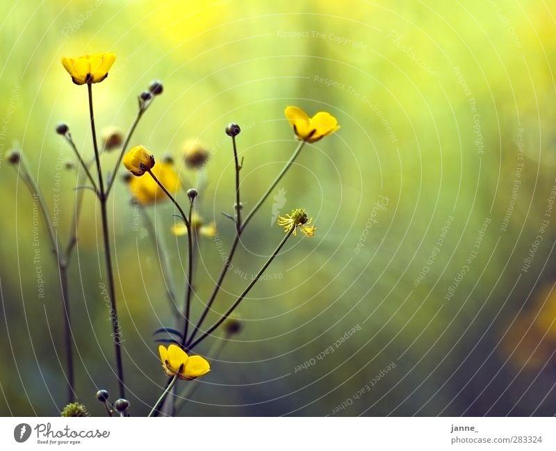 wiesenblumen Natur grün Pflanze gelb Wiese Gras
