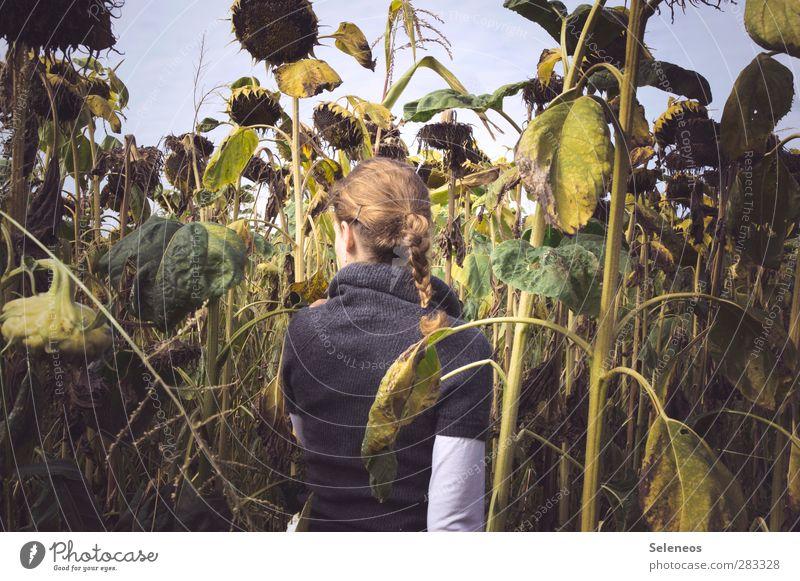 Semitschki Lebensmittel Sonnenblumenkern Sonnenblumenfeld Mensch feminin Frau Erwachsene 1 Umwelt Natur Himmel Herbst Pflanze Blume Blatt Blüte Nutzpflanze