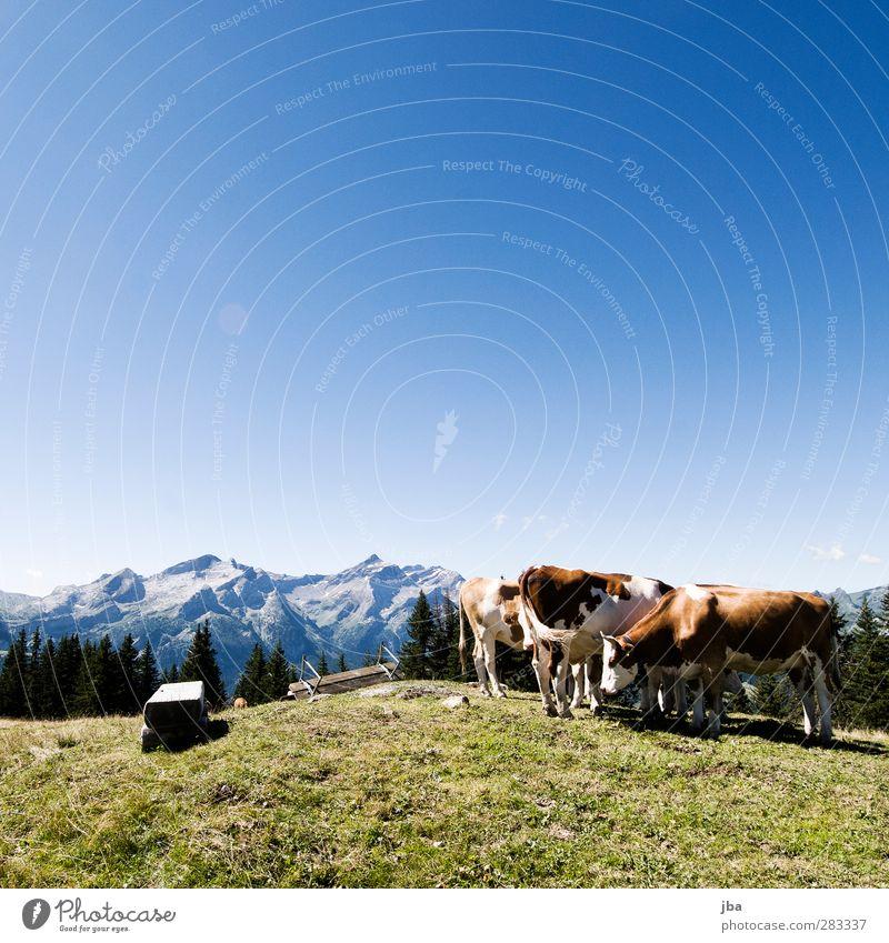 rumstehen Natur Sommer Tier Landschaft Erholung Wiese Berge u. Gebirge Herbst Gras Freiheit Luft Felsen Zufriedenheit warten wandern Ausflug