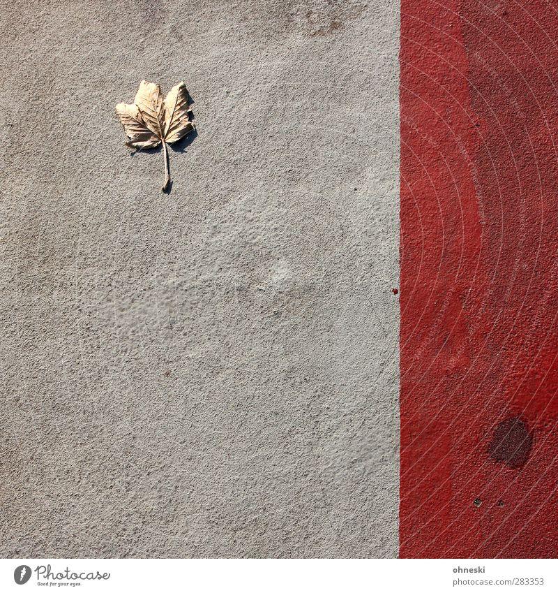 Urban Nature Herbst Blatt Ahornblatt Wege & Pfade Bürgersteig Beton Linie rot Einsamkeit Verfall Farbfoto Außenaufnahme abstrakt Muster Strukturen & Formen