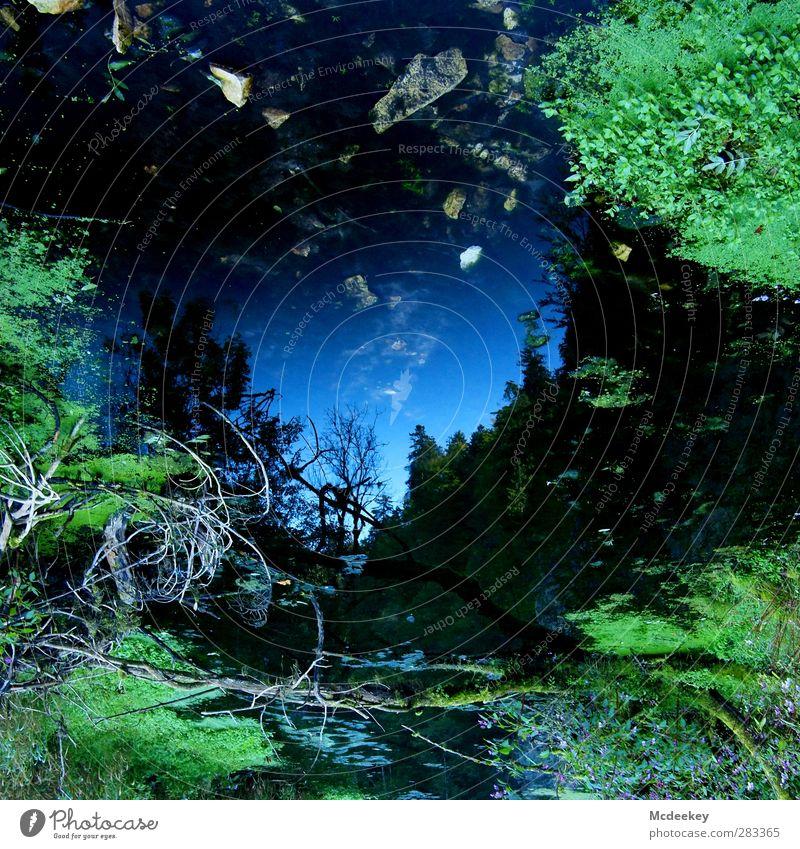 Spieglein, Spieglein an der Wand,... Umwelt Natur Landschaft Pflanze Wasser Wolkenloser Himmel Sommer Schönes Wetter Baum Gras Moos Blatt Wald Moor Sumpf Teich