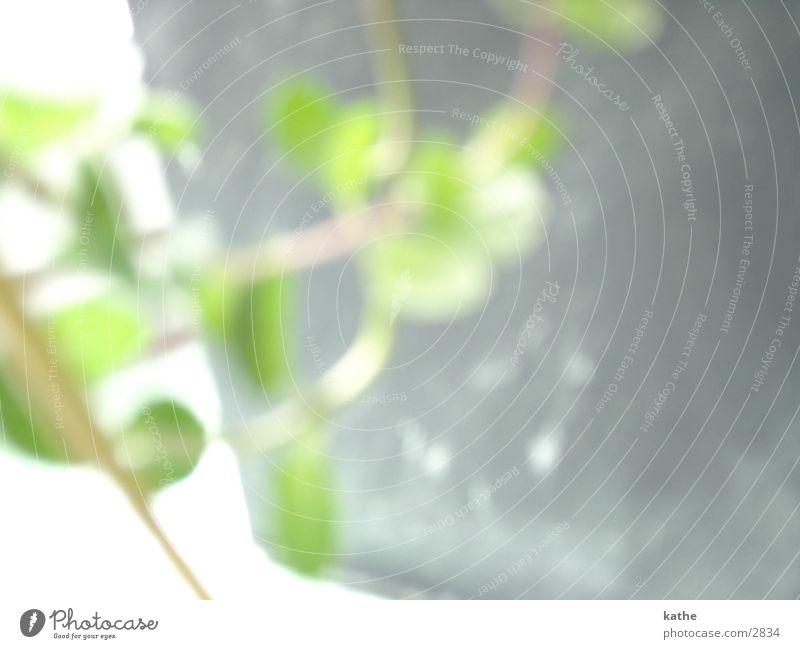 fensterbrett02 Blume grün Pflanze Fensterbrett Blattgrün