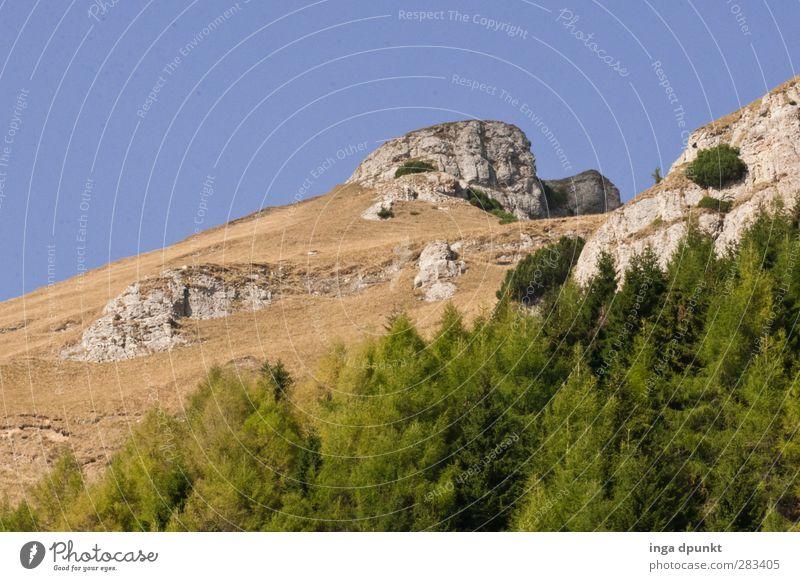 Waldgrenze Himmel Natur Ferien & Urlaub & Reisen Pflanze Baum Landschaft Umwelt Berge u. Gebirge Felsen natürlich Wachstum Abenteuer Gipfel Hügel