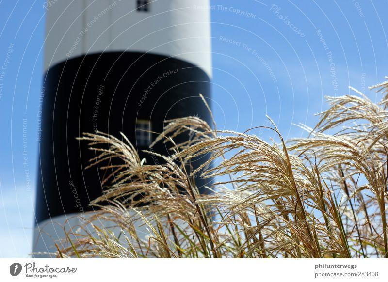 farbloser Leuchtturm Natur blau Ferien & Urlaub & Reisen weiß Sommer Pflanze Sonne Meer Landschaft schwarz Ferne Umwelt Gras Küste Wetter Klima